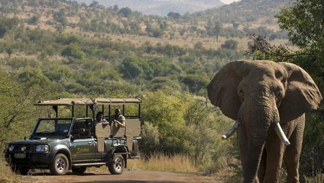 activities kruger park safaris